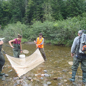 Electroseining with the Nepisiguit salmon